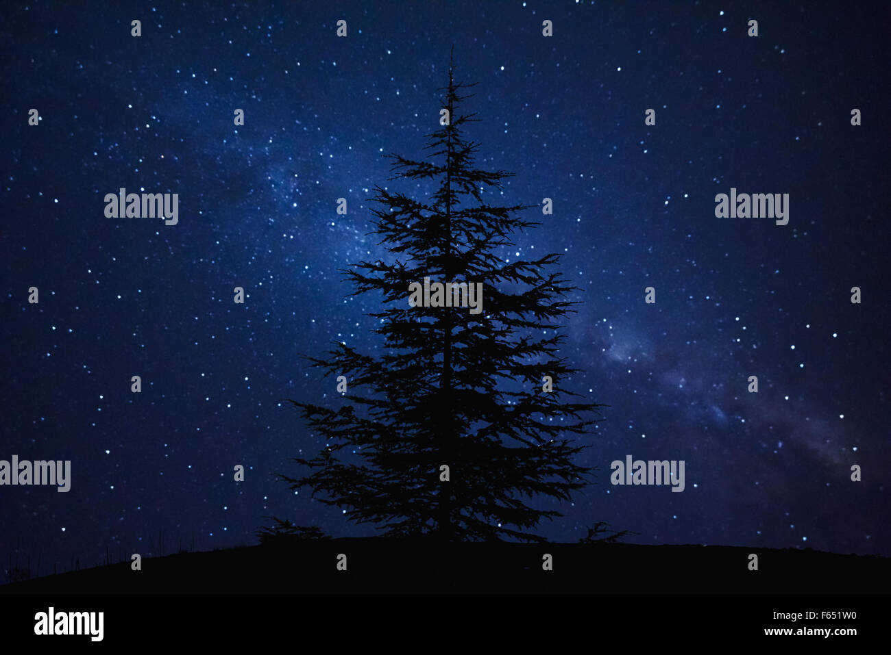 Silhouette of Pine Tree and Milky Way - Stock Image