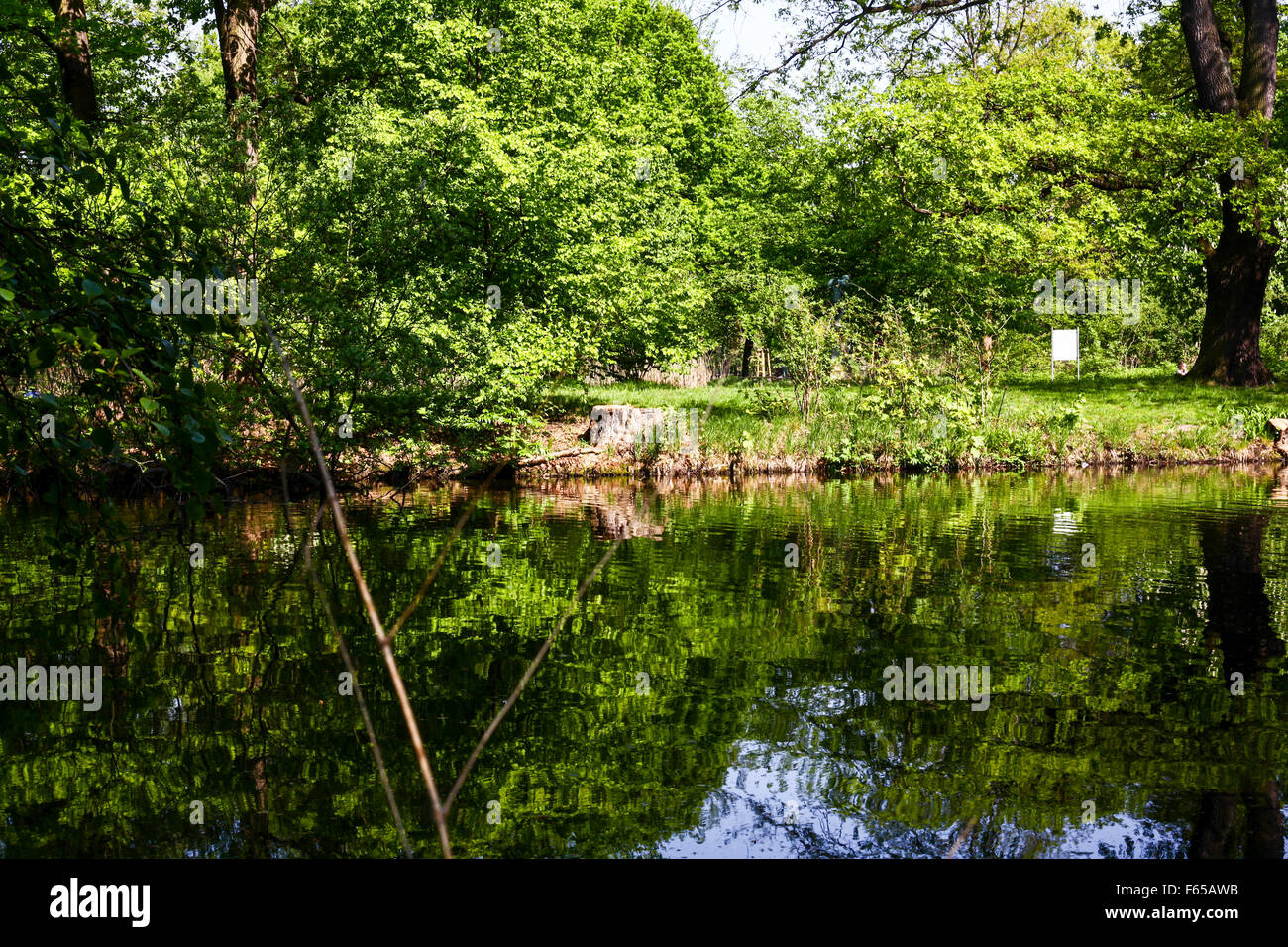 Trees around a water pond Stock Photo