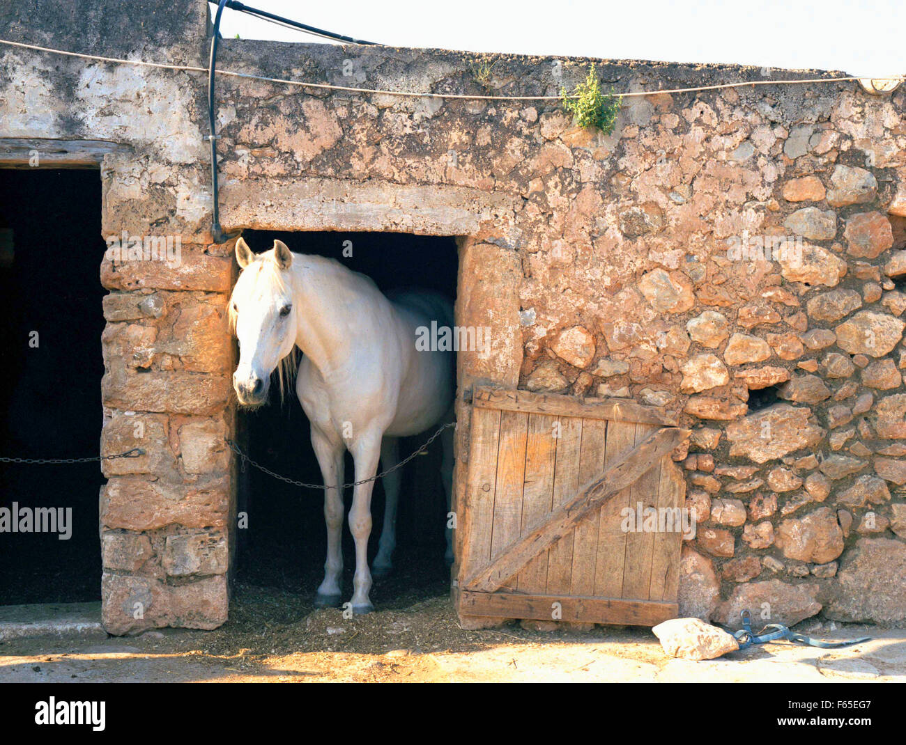 White Horse In Stable Made Of Stone Walls On Ibiza Island Spain Stock Photo Alamy