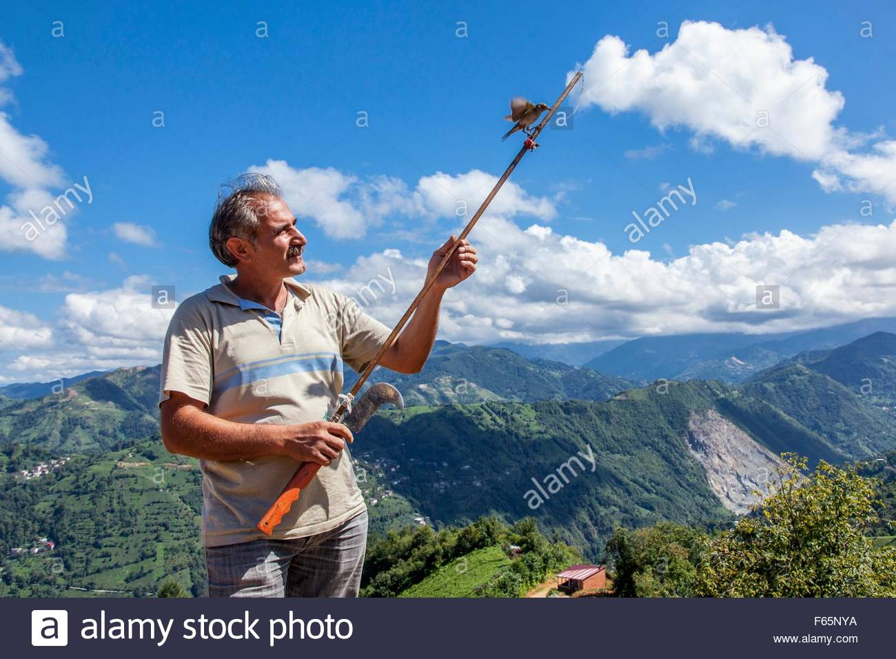 A Lase (one of an ethnic minority) trying to catch a sparrowhawk with a decoy bird in the mountains behind Pazar, - Stock Image