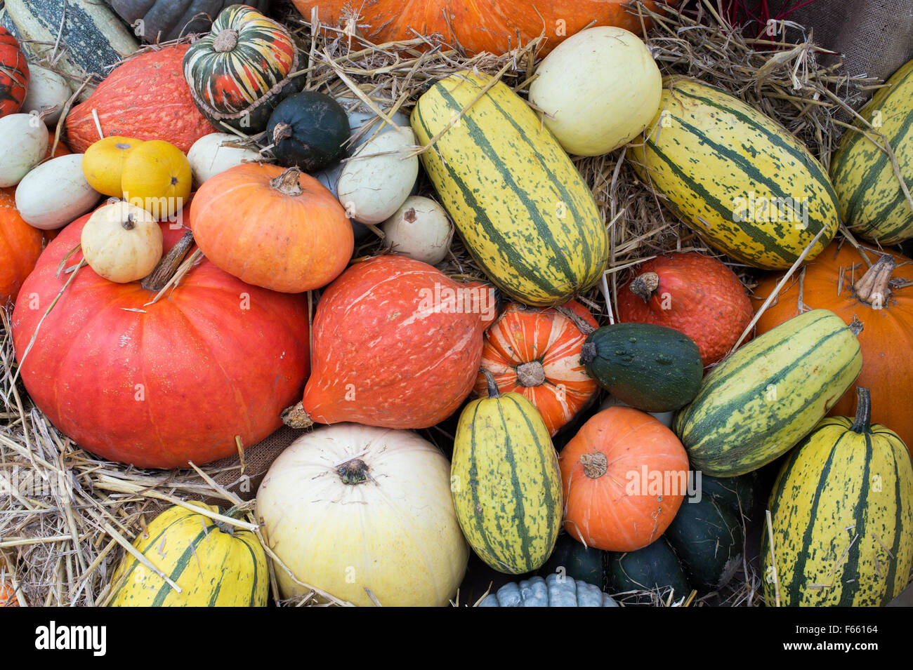 Pumpkin, Squash and Gourd Display - Stock Image