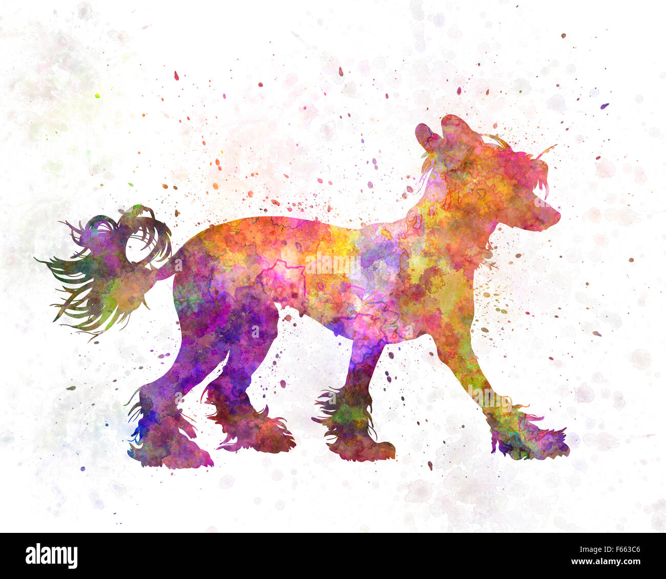 Chinese crested dog 01 in watercolor - Stock Image