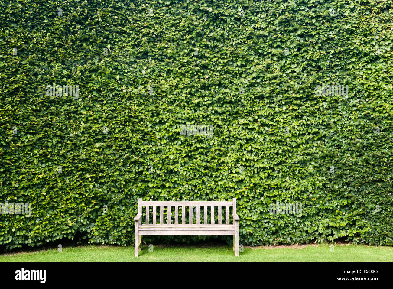 A wooden garden bench in front of a tall hedge of clipped beech, UK - Stock Image