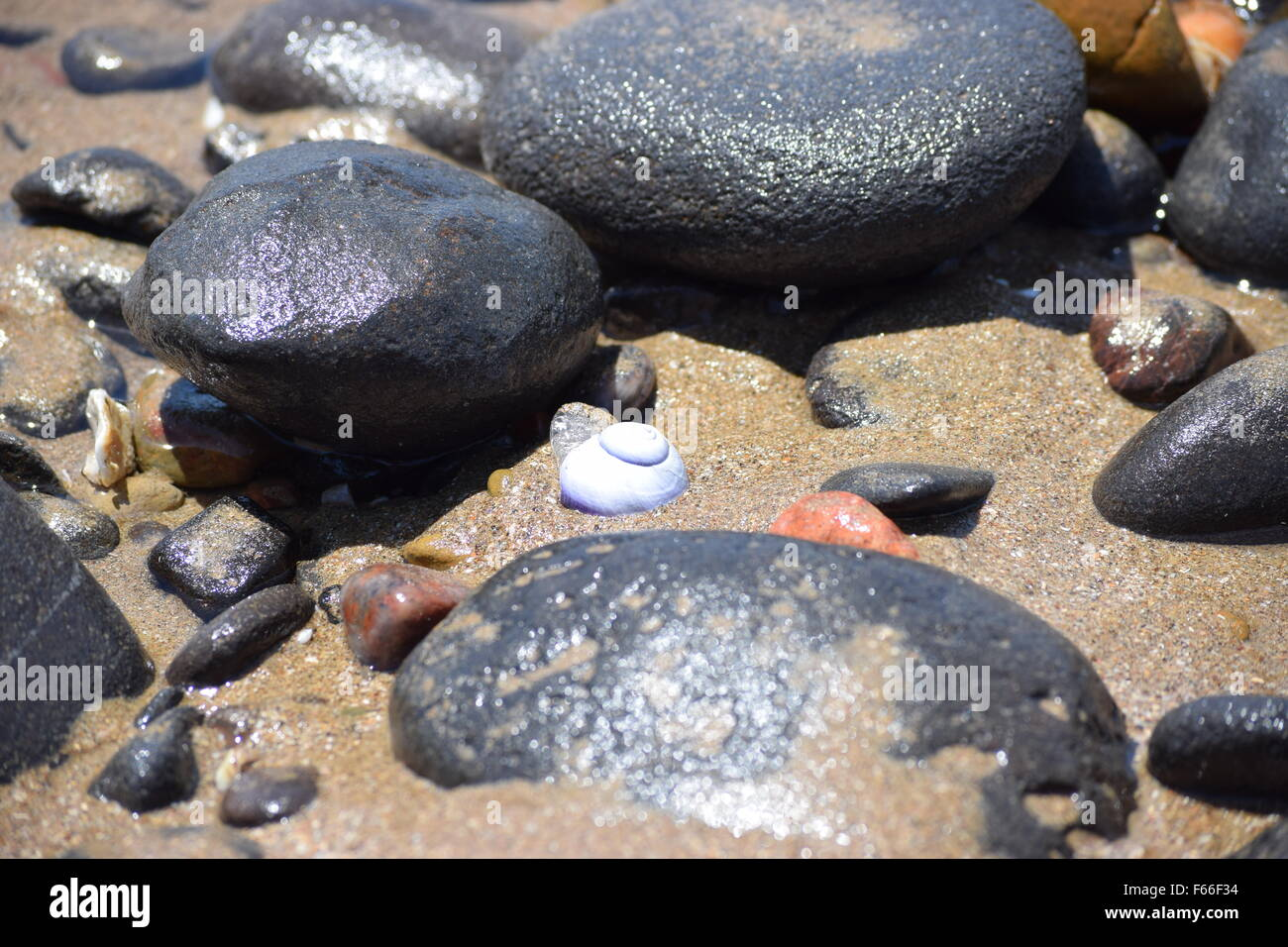 pebbles and rocks on the east coast of Australia, as the tide is going out, sea snail in the centre of the photo - Stock Image