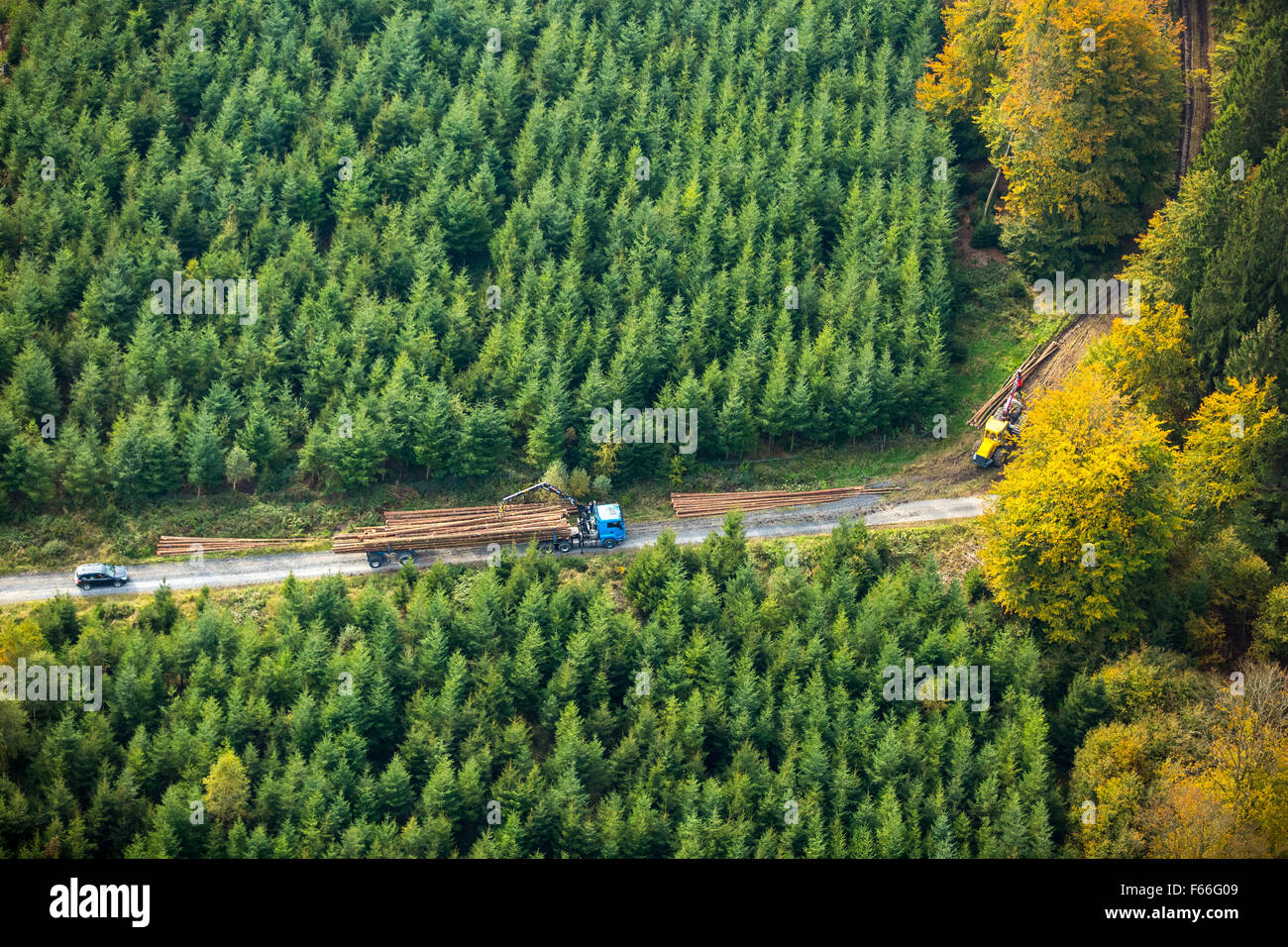 Forest workers, tree felling and forestry Mescheder Waldglas Mecke, Forest in Meschede, fall foliage, autumn forest - Stock Image