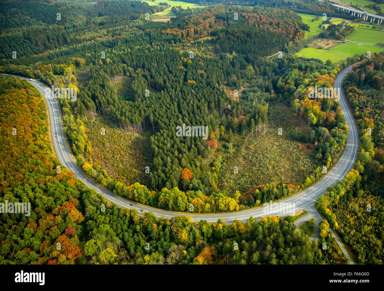 elongated curve in the Arnsberg Forest, Forest in Meschede, fall foliage, autumn forest in bright colors in the - Stock Image