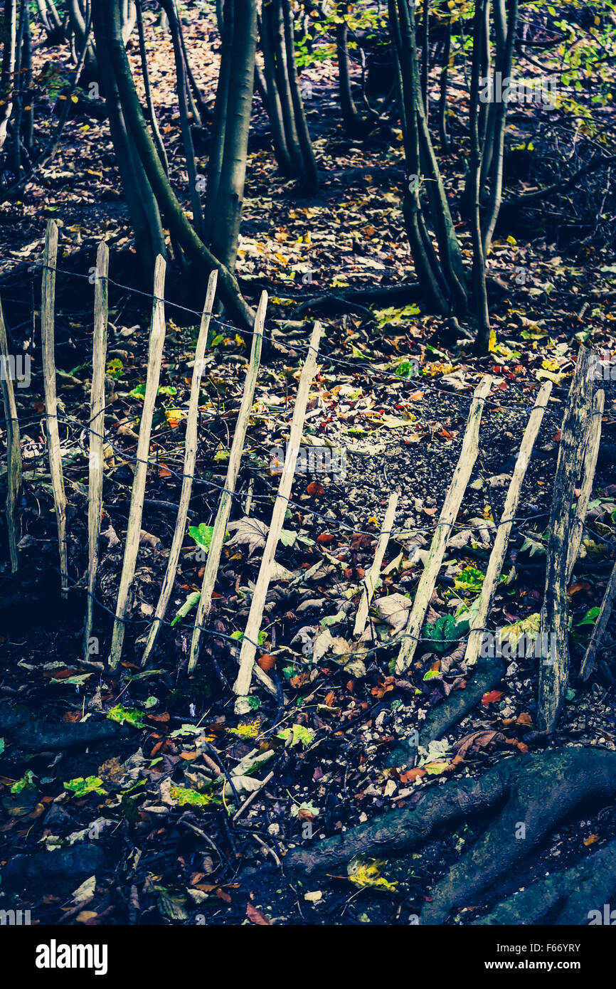 A broken woodland picket fence leading to a tree covered bank. - Stock Image