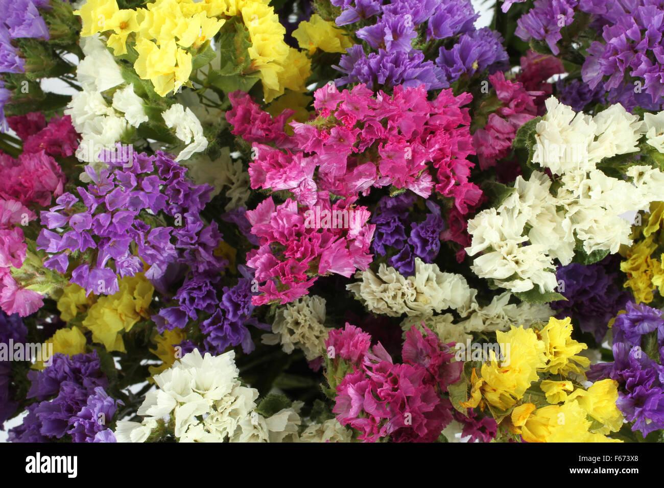 Colorful Statice Flowers  -  Limonium Background - Stock Image