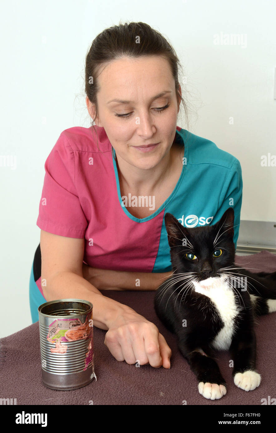 Felix the cat recovering at the PDSA in Coventry with PDSA veterinary nurse Debbie Evans after getting his head - Stock Image