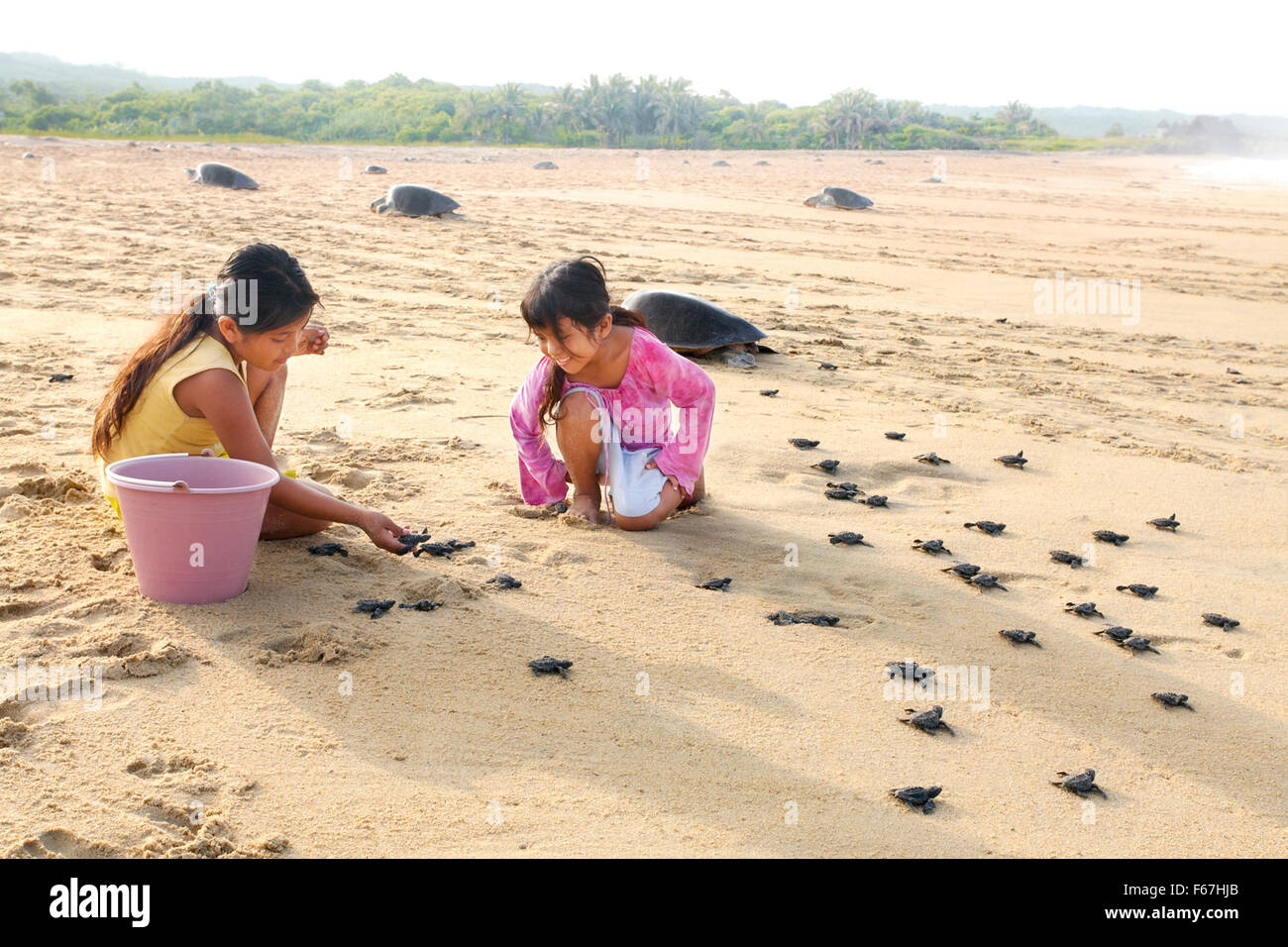 Girls from the village of Ixtapilla release baby Olive Ridley Turtles. - Stock Image