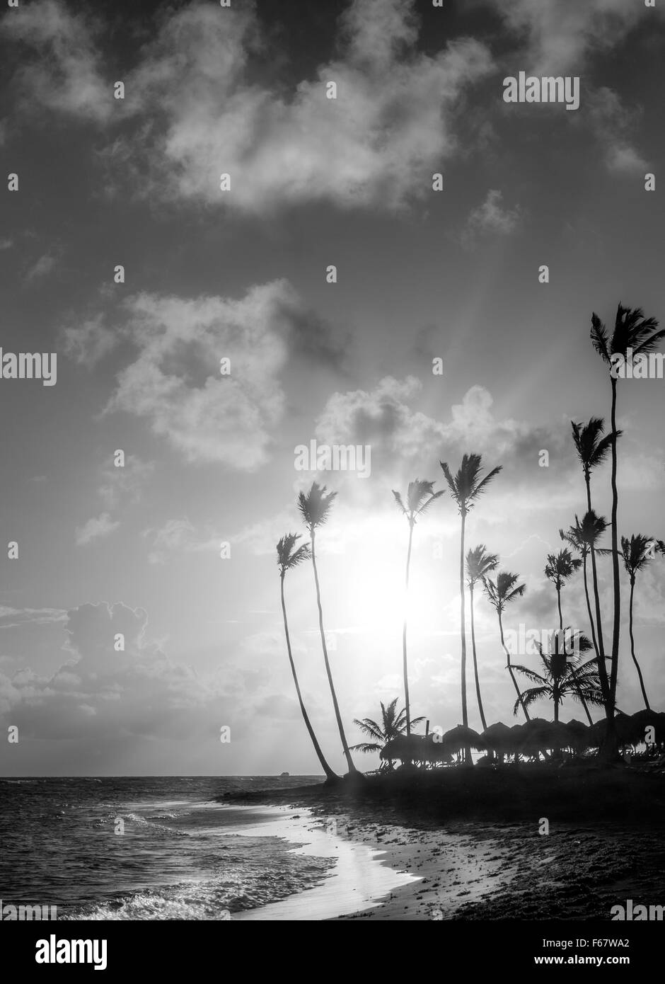 Sunrise over Caribbean sea and leaning palm trees in Dominican Republic - Stock Image