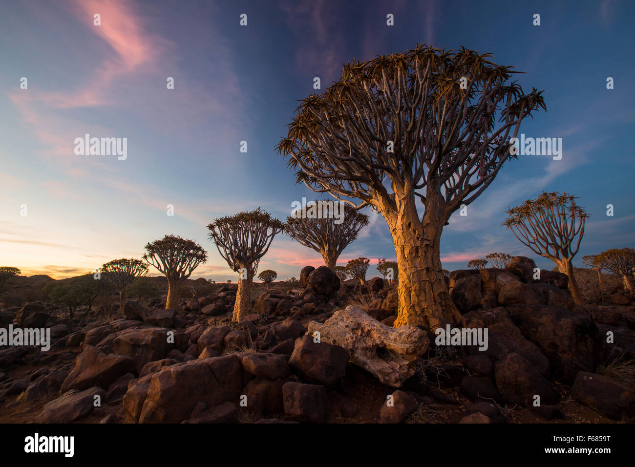 Quiver Tree Forest National Monument at sunset, Namibia, Africa Stock Photo