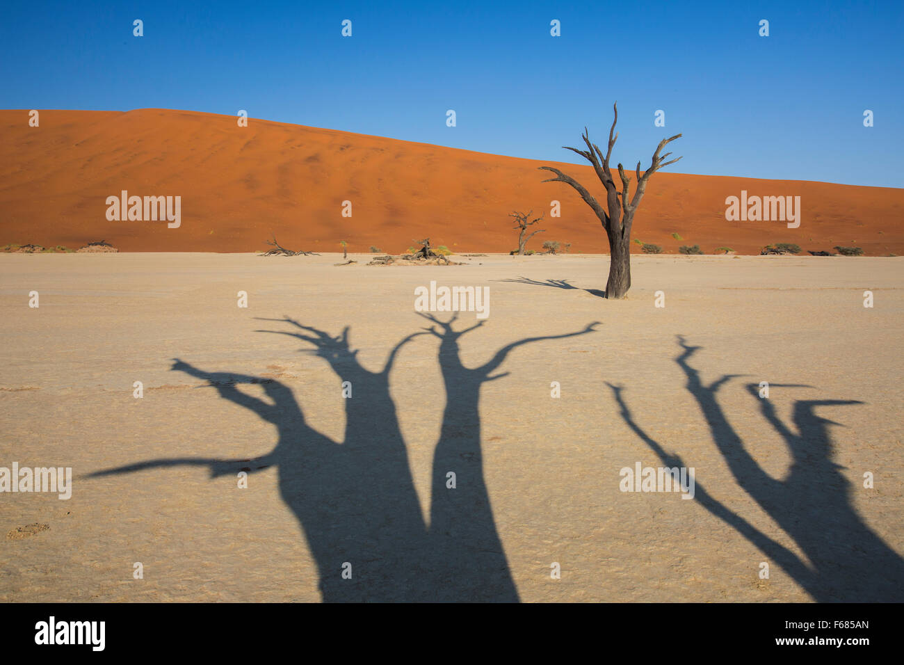 Shadows of desiccated camel-thorn trees in Deadvlei at sunrise, Namibia, Africa - Stock Image