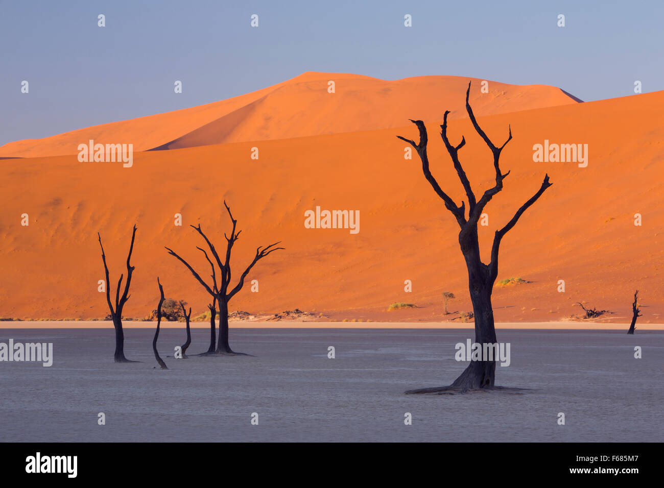 Desiccated camel-thorn trees in Deadvlei at sunrise, Namibia, Africa - Stock Image