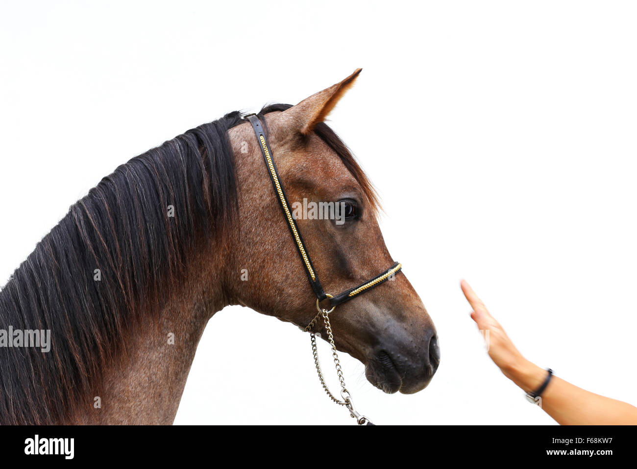 Horse Head Side View High Resolution Stock Photography And Images Alamy