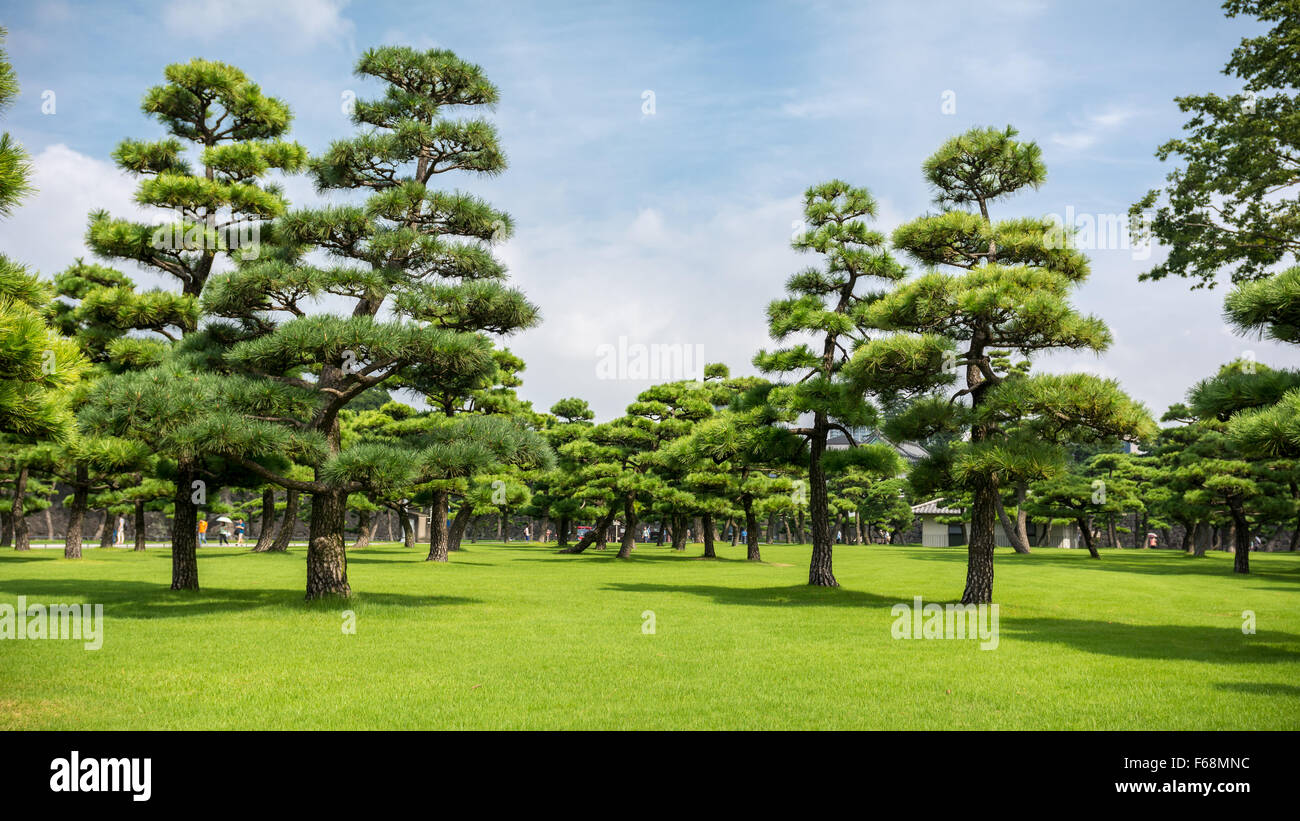 The gardens of the Imperial Palace in Tokyo. - Stock Image