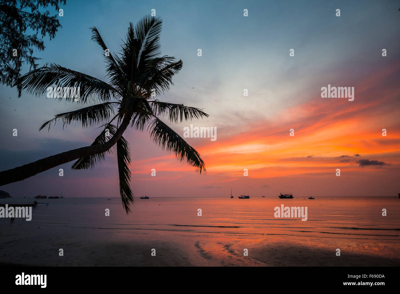 Palm tree at sunset, by the sea, South China Sea, Gulf of Thailand, Koh Tao, Thailand - Stock Image