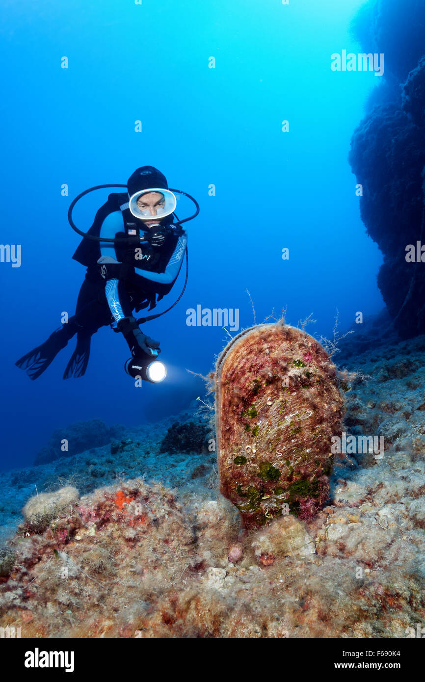 Diver with lamp observing noble pen shell or fan mussel (Pinna nobilis), Corfu, Ionian Islands, Mediterranean Sea, - Stock Image