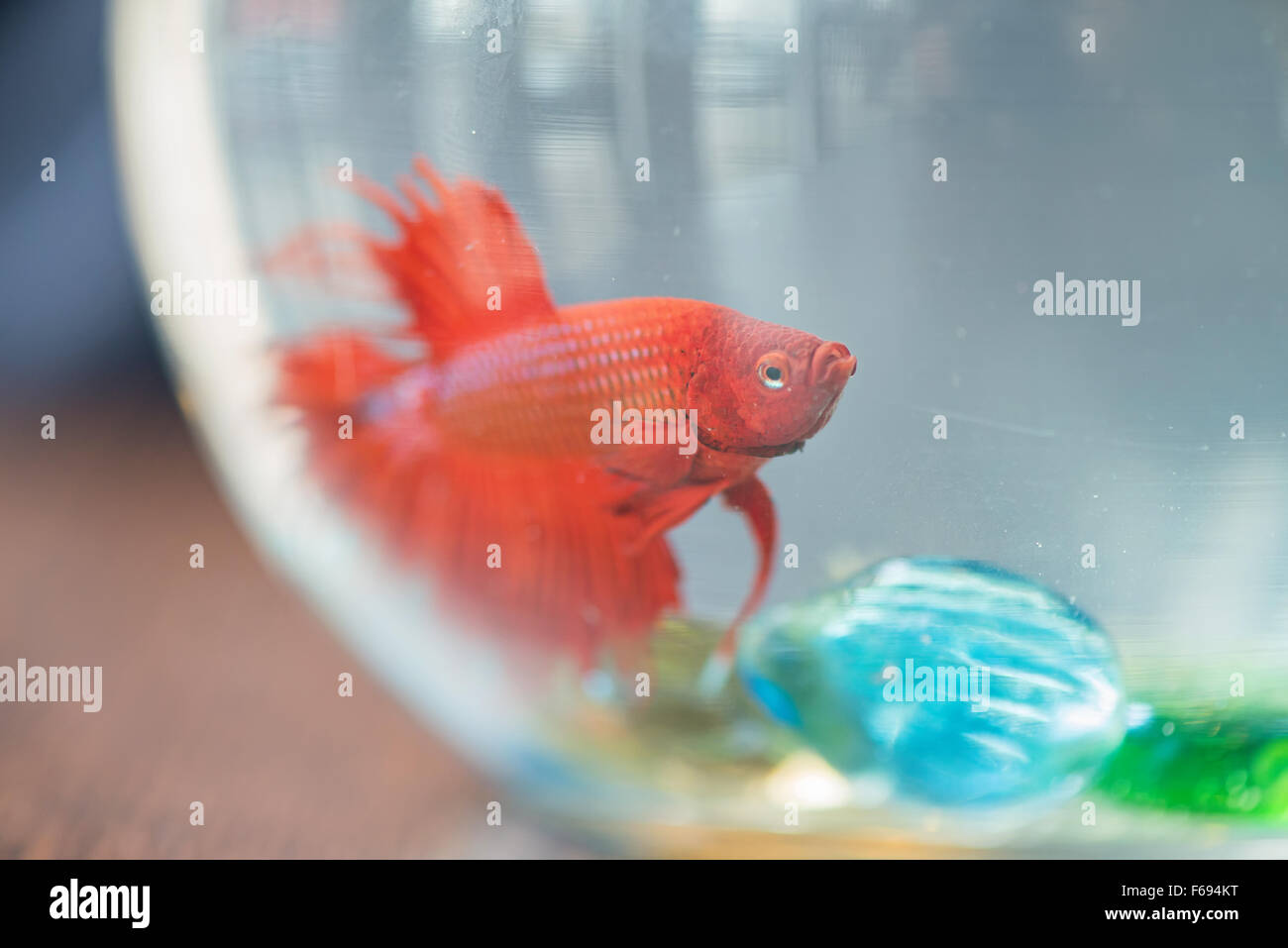 Small Fish Tank Stock Photos & Small Fish Tank Stock Images - Alamy