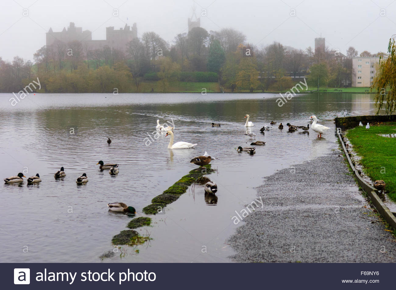 Linlithgow, UK. 15th Nov, 2015. UK Weather. Pathway around the loch. Several days of heavy rain have caused the - Stock Image
