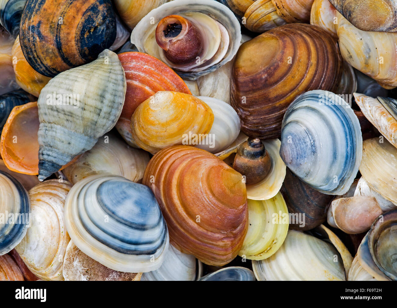 Assorted colourful shells - Stock Image