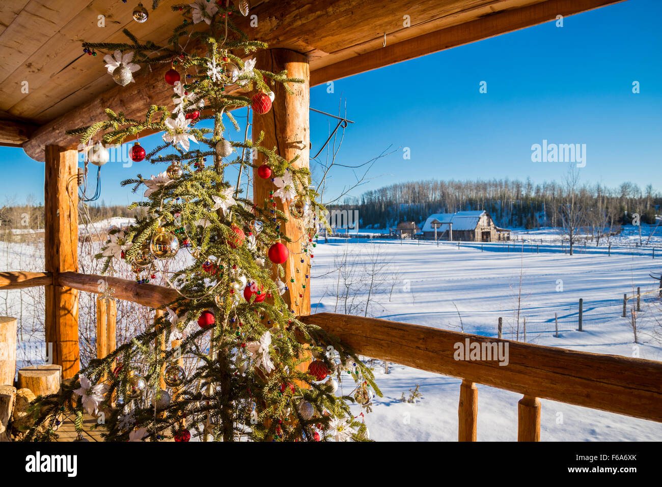 Christmas tree on log house porch, Cariboo Region, British Columbia, Canada - Stock Image