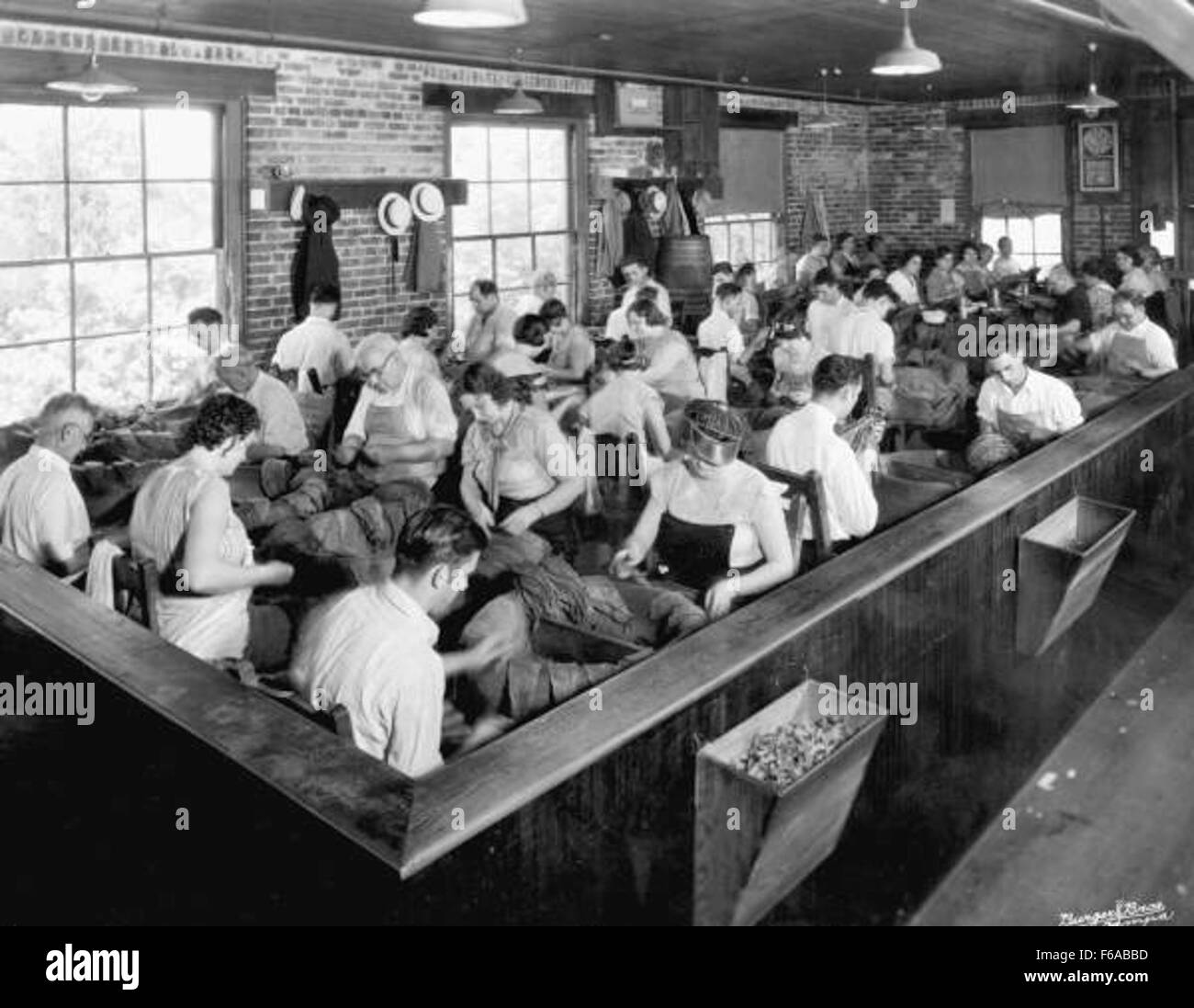Tobacco workers sorting leaves - Tampa - Stock Image