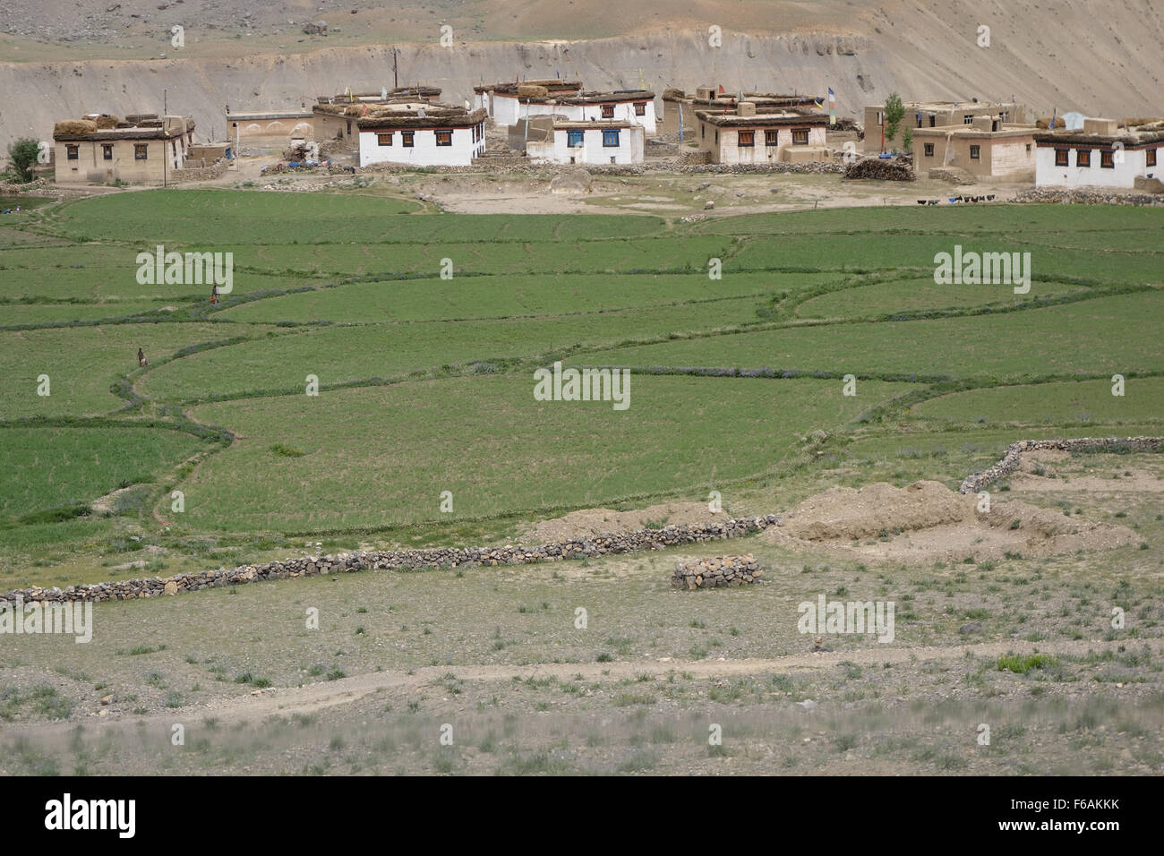 Spiti Valley, Himachal Pradesh, Northern India - homes and fields with copyspace - Stock Image