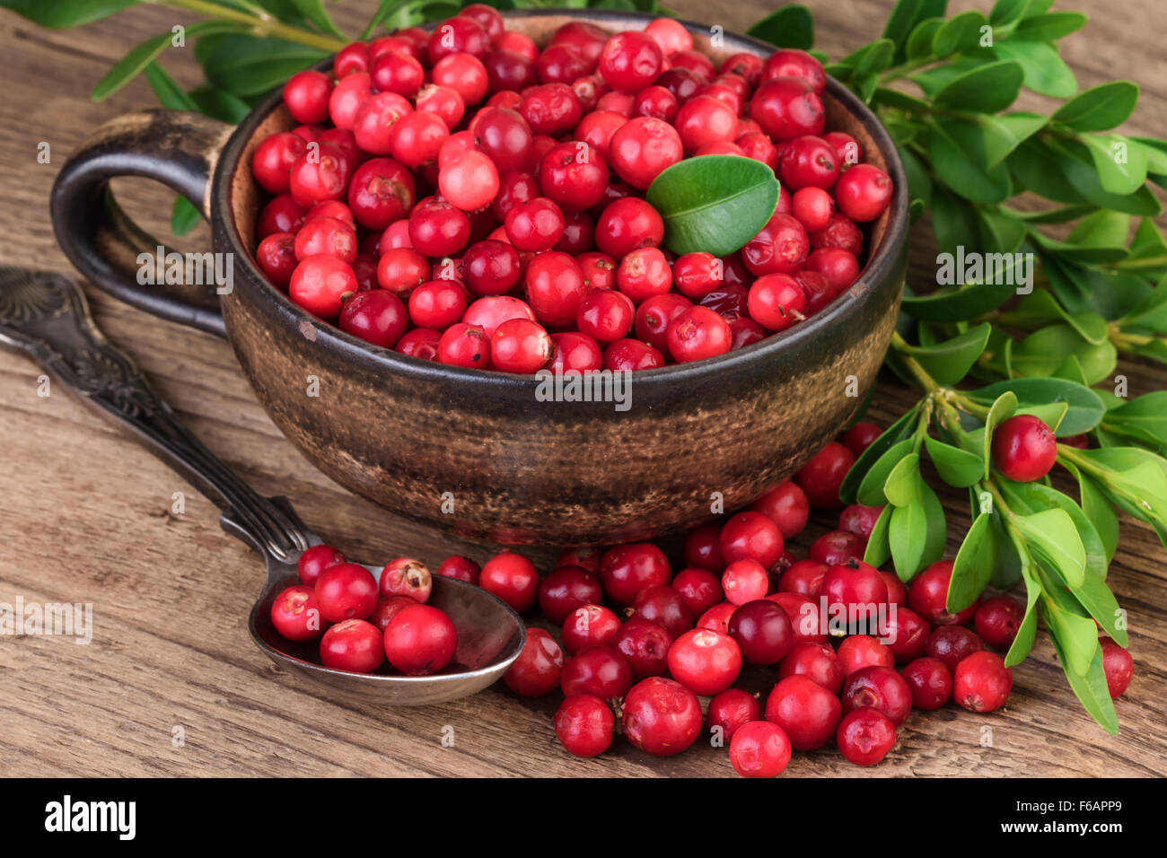 Cranberry Lingonberry - Stock Image