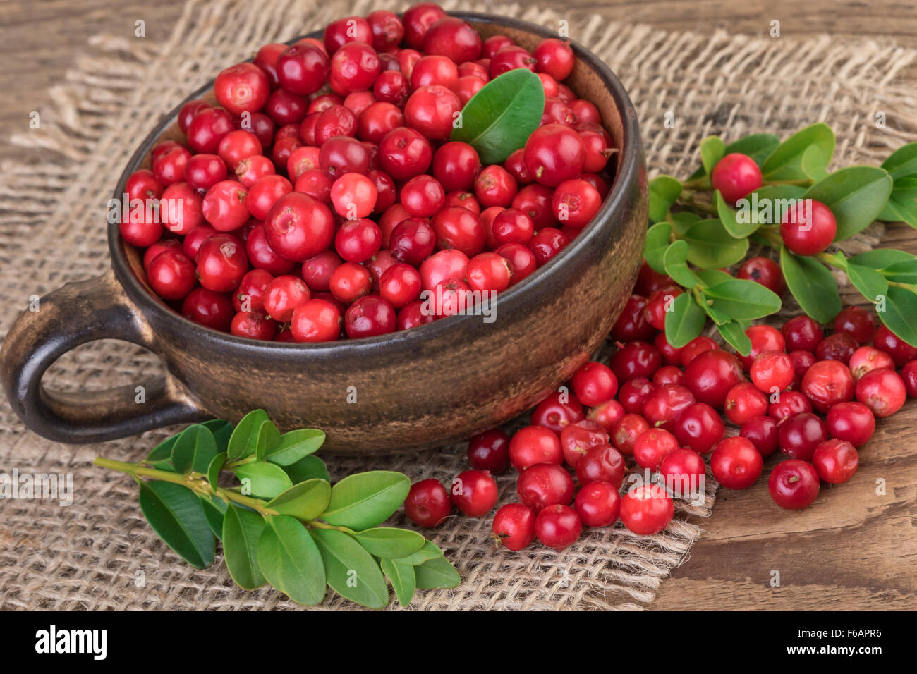 Lingonberry Cranberry Rustic Still Life - Stock Image
