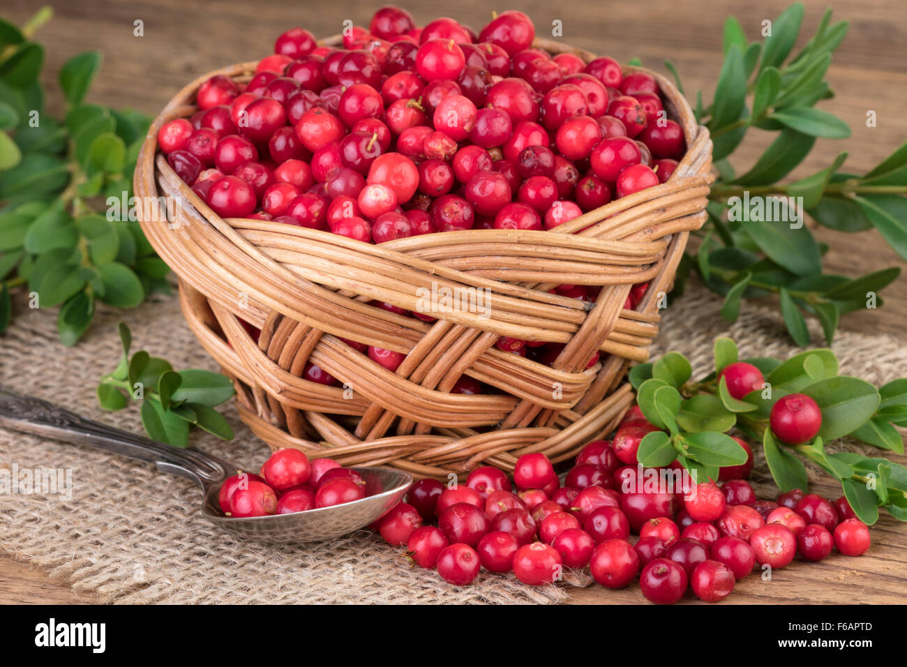 Basket of Cranberry Lingonberry - Stock Image