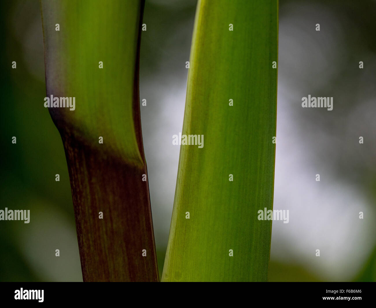 Abstract,. Smooth green transition to Black, bokeh highlights behind. Calm, reasoned discussion. The feeling of - Stock Image