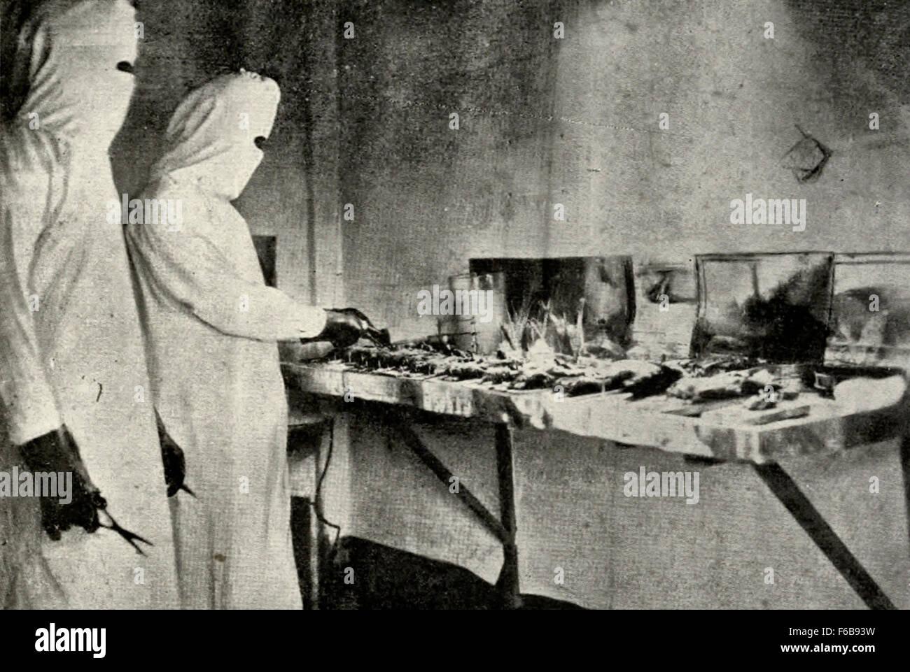Great Pneumonic Plague, Manchuria, 1910 Examing Rats Stock Photo
