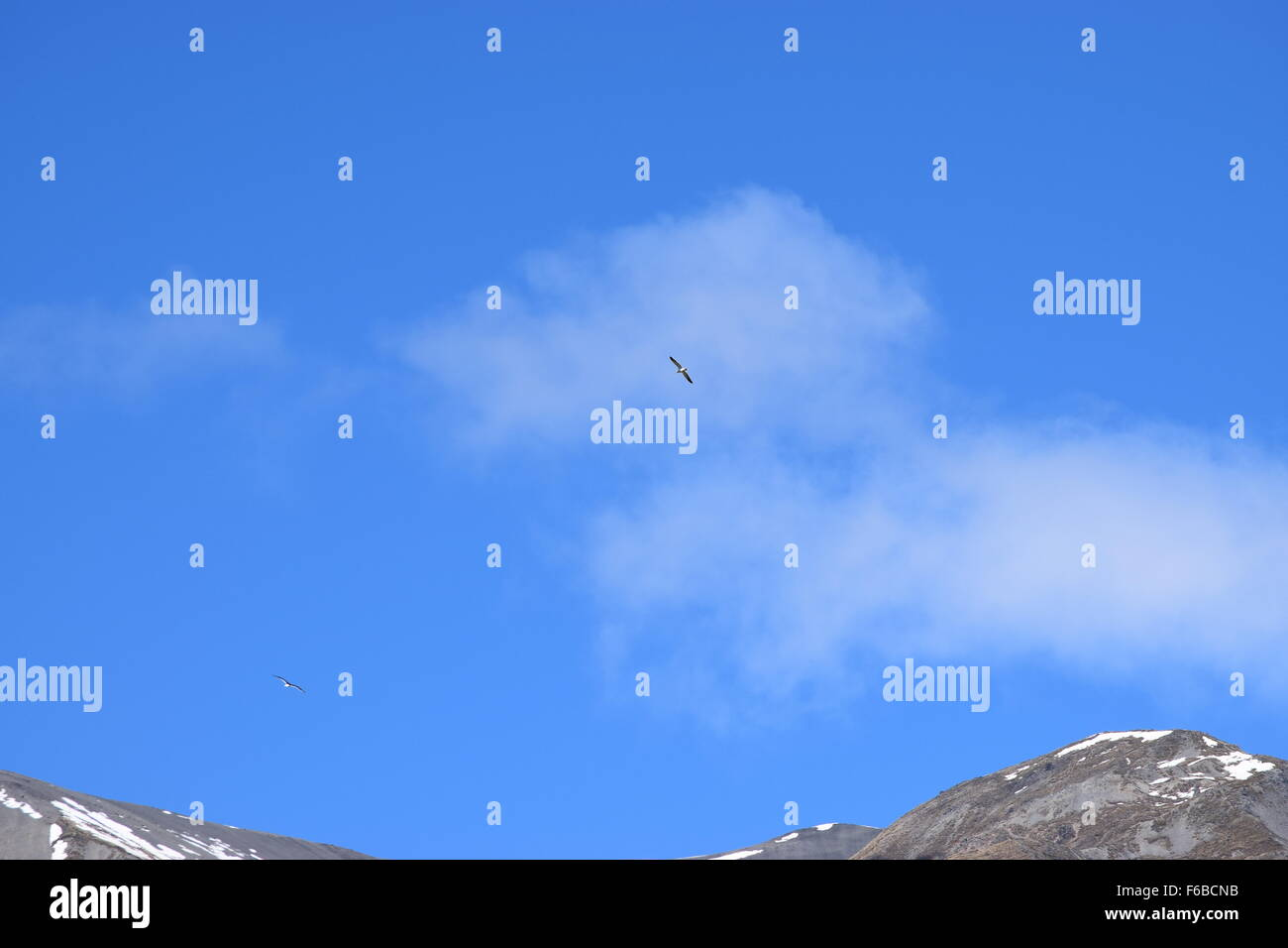 vivid blue sky with a bird in full flight, white fluffy clouds and mountain tops, photo taken on the Great Alpine - Stock Image