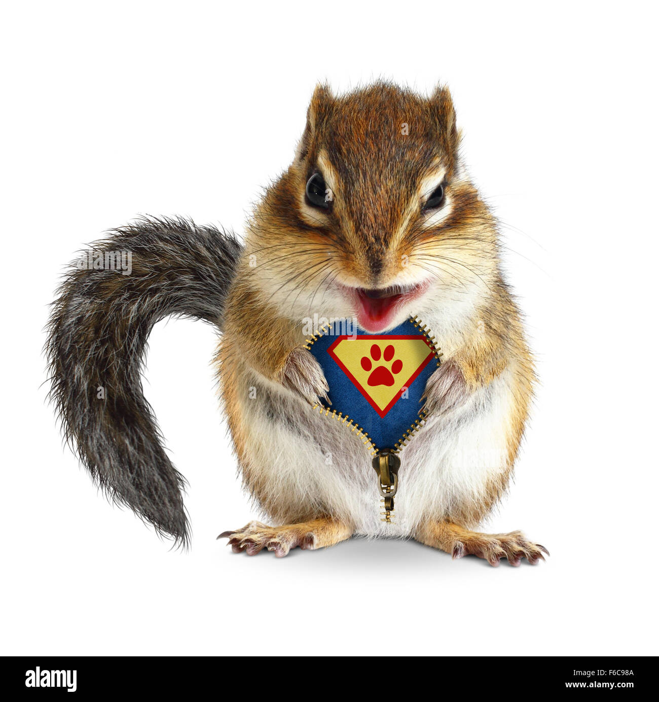 Funny animal super hero, squirrel unbuckle his fur, isolated on white - Stock Image