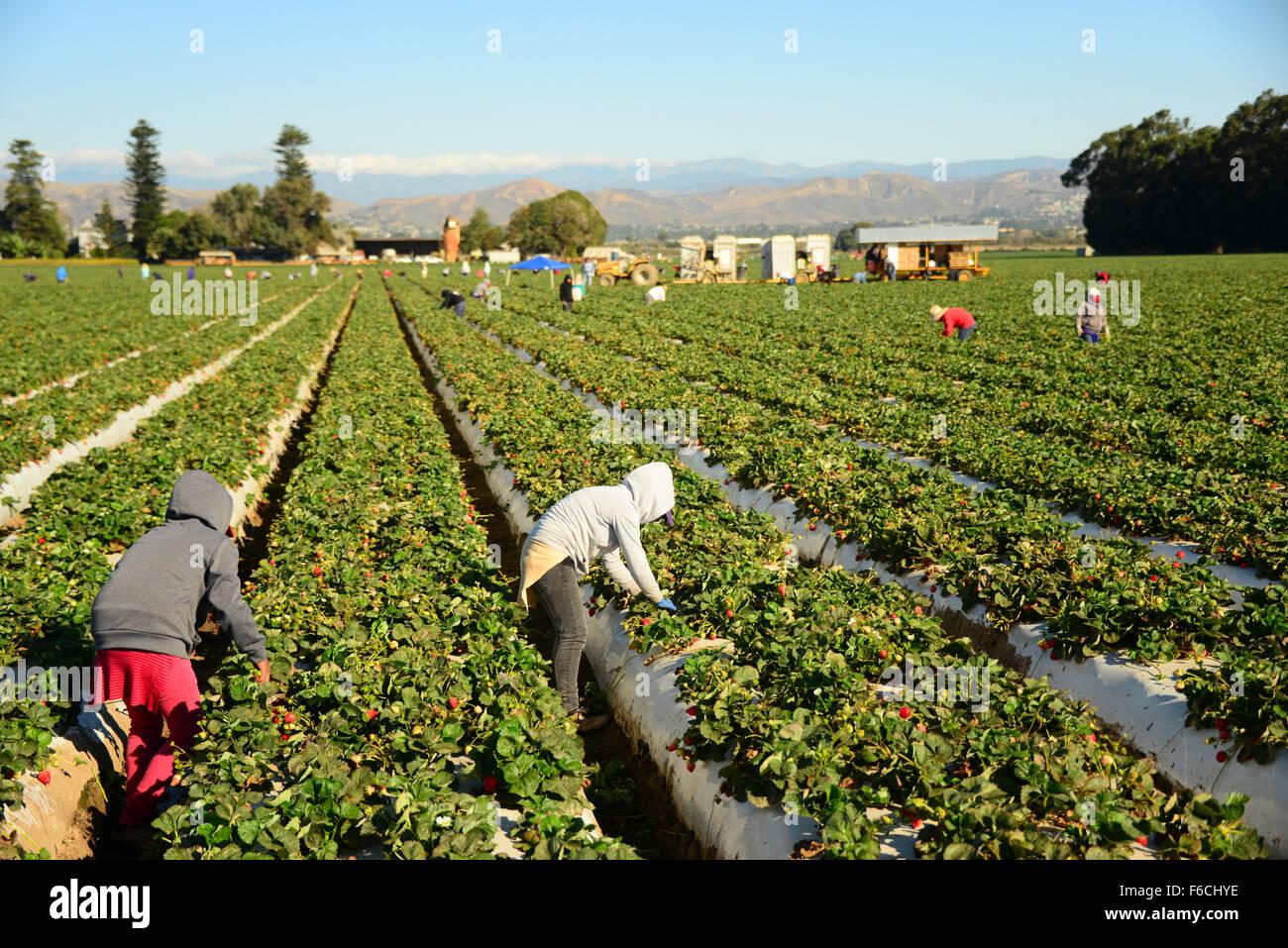 Seasonal Farm Work High Resolution Stock Photography And Images Alamy