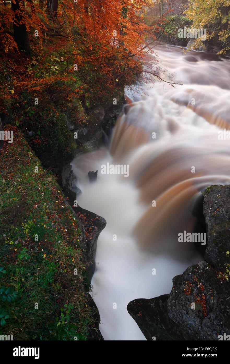 The River Eden in full flow during heavy rain, Autumn. Eden Valley. Cumbria. UK. - Stock Image
