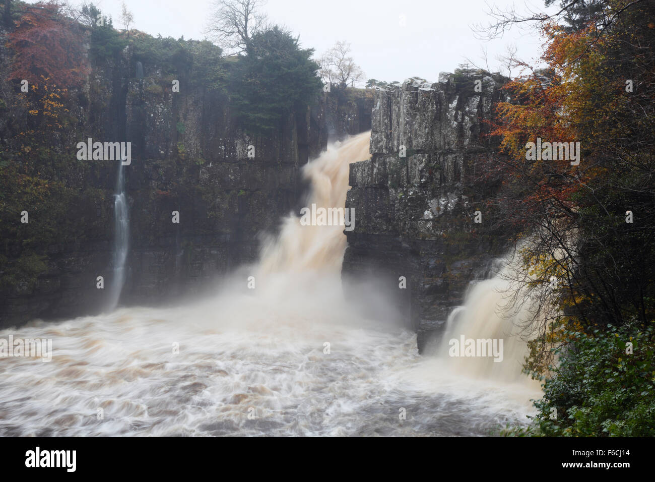High Force in full flow during heavy rainfall on the River Tees. Teesdale. County Durham. UK. - Stock Image