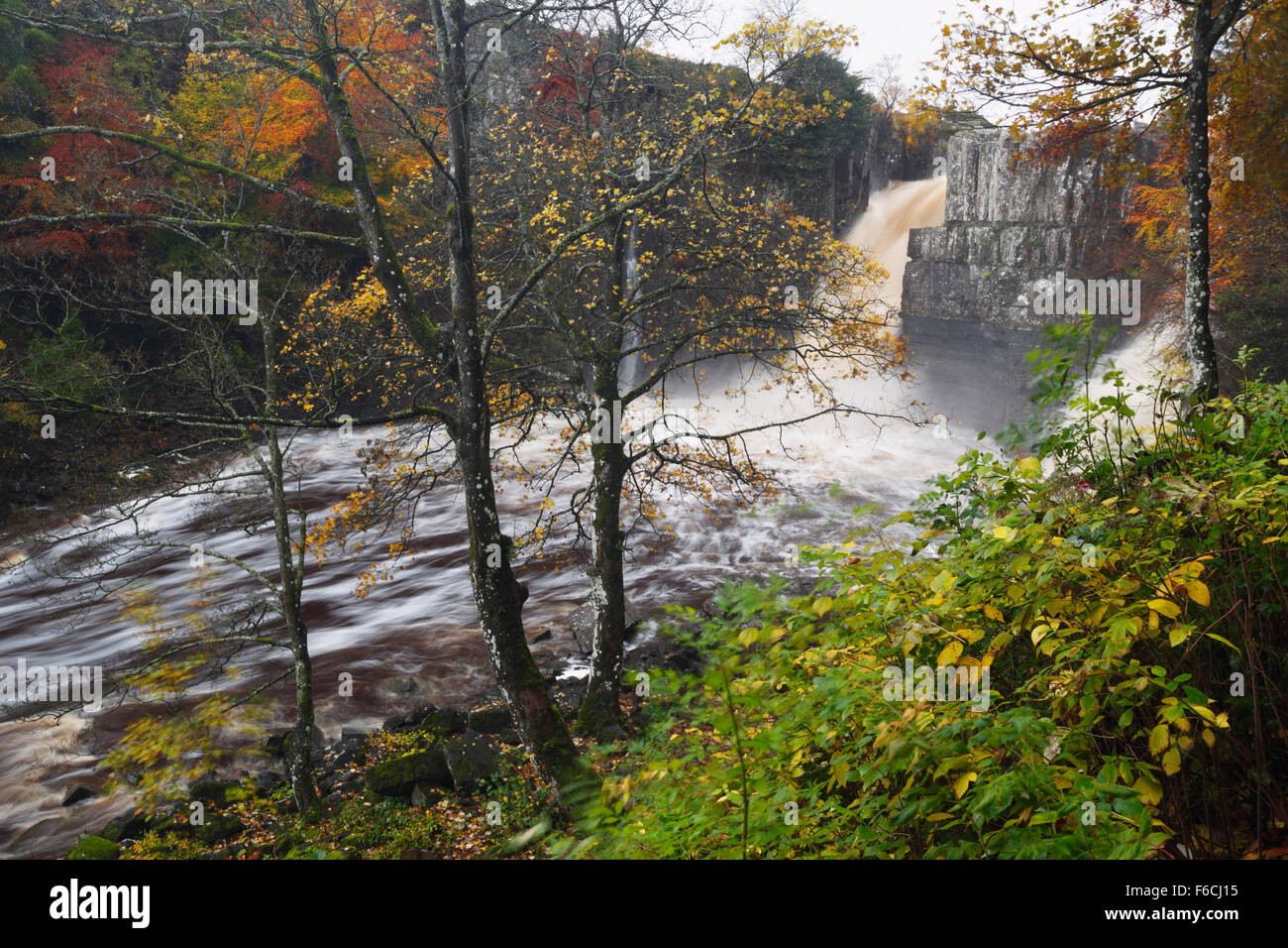 High Force in full flow on the River Tees. Teesdale. County Durham. UK. - Stock Image