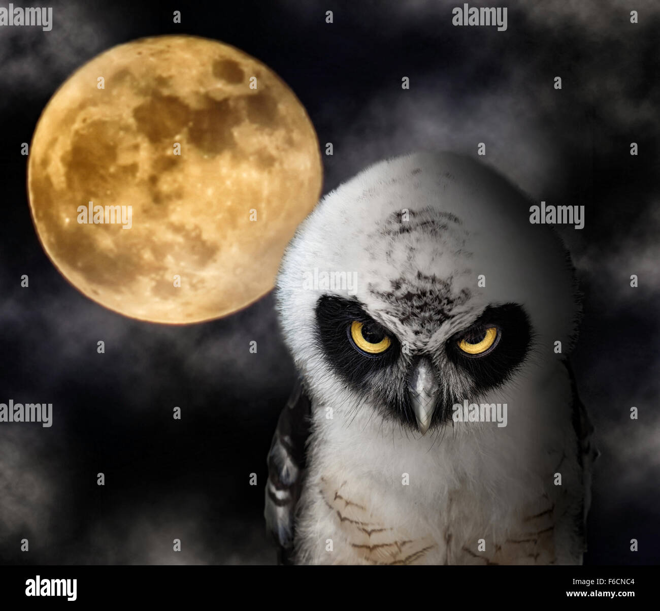 owl with moon stock photos owl with moon stock images alamy