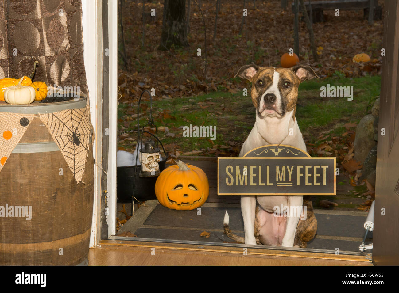 Trick or Treat...Smell my Feet - Stock Image