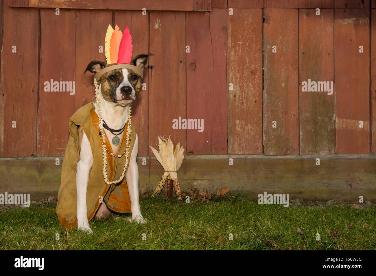 Thanksgiving Dog - Stock Image