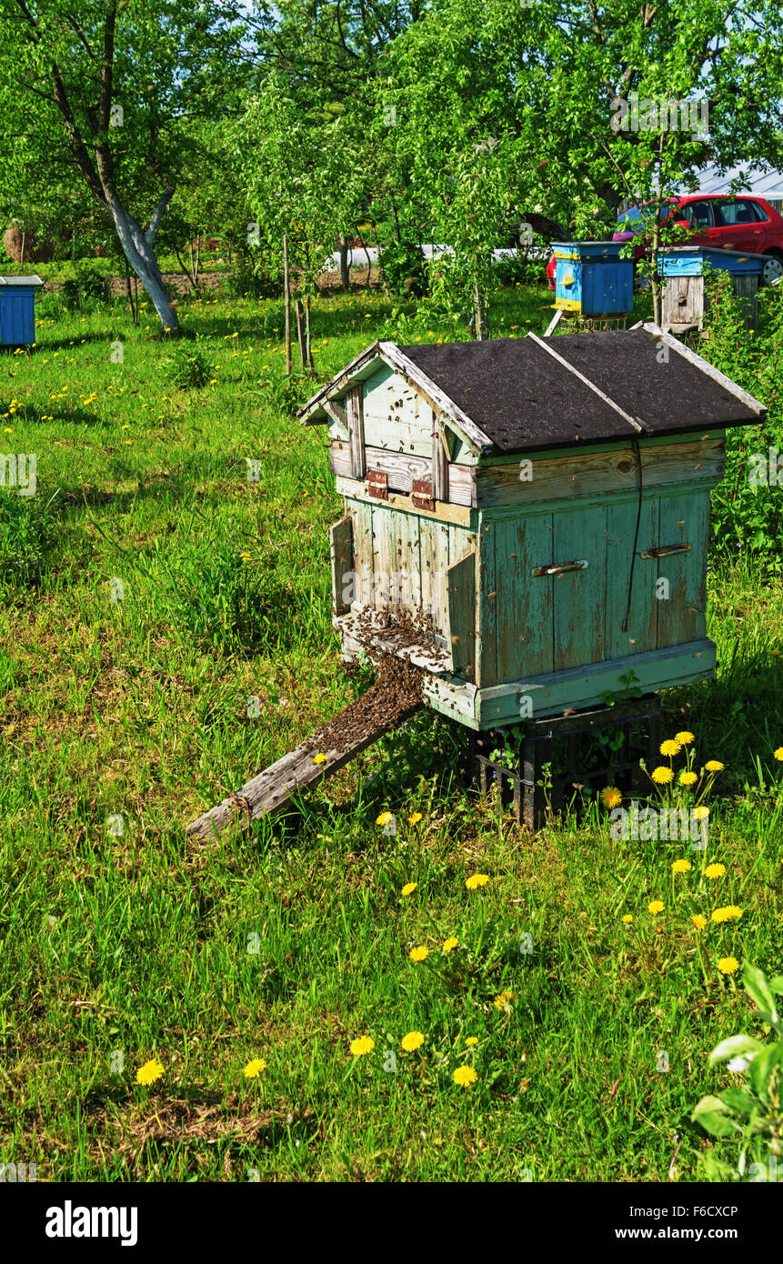 The bees swarm takes off from a beehive. - Stock Image