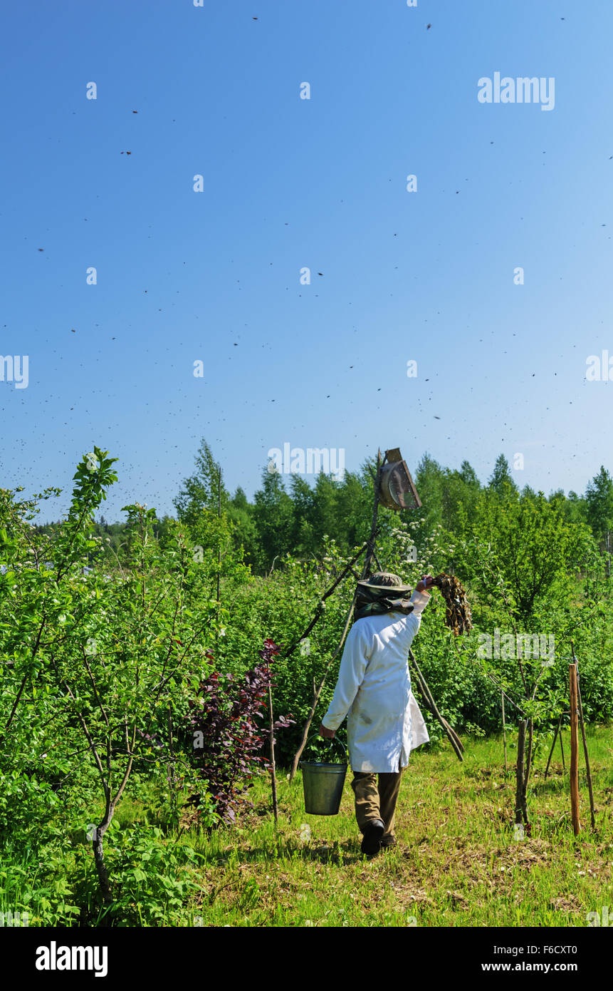 Installation of a trap for the flying bees swarm.Water shower for bees. - Stock Image