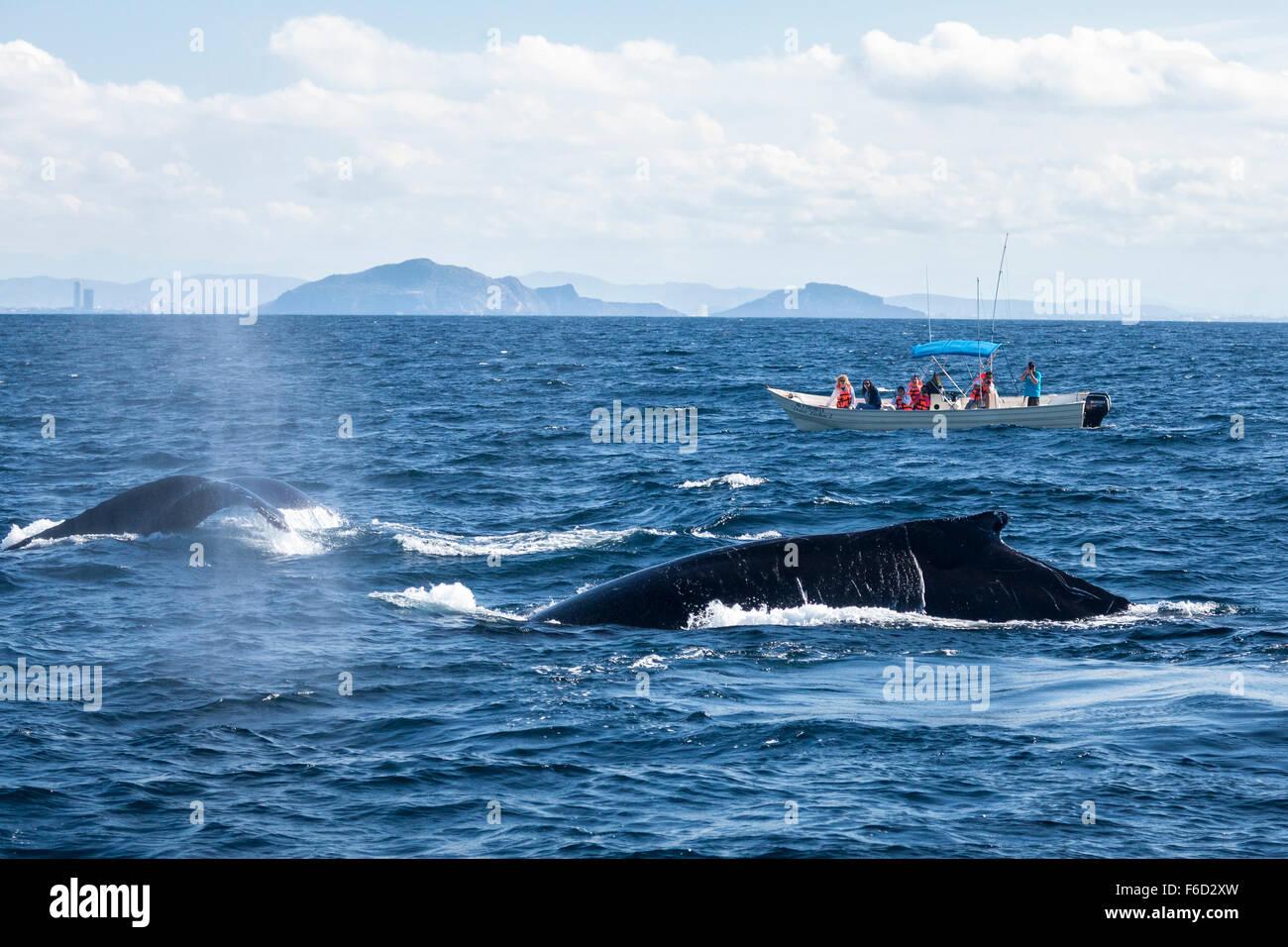 A boat of tourists observe humpback whales off the coast of Mazatlan, Sinaloa, Mexico. - Stock Image