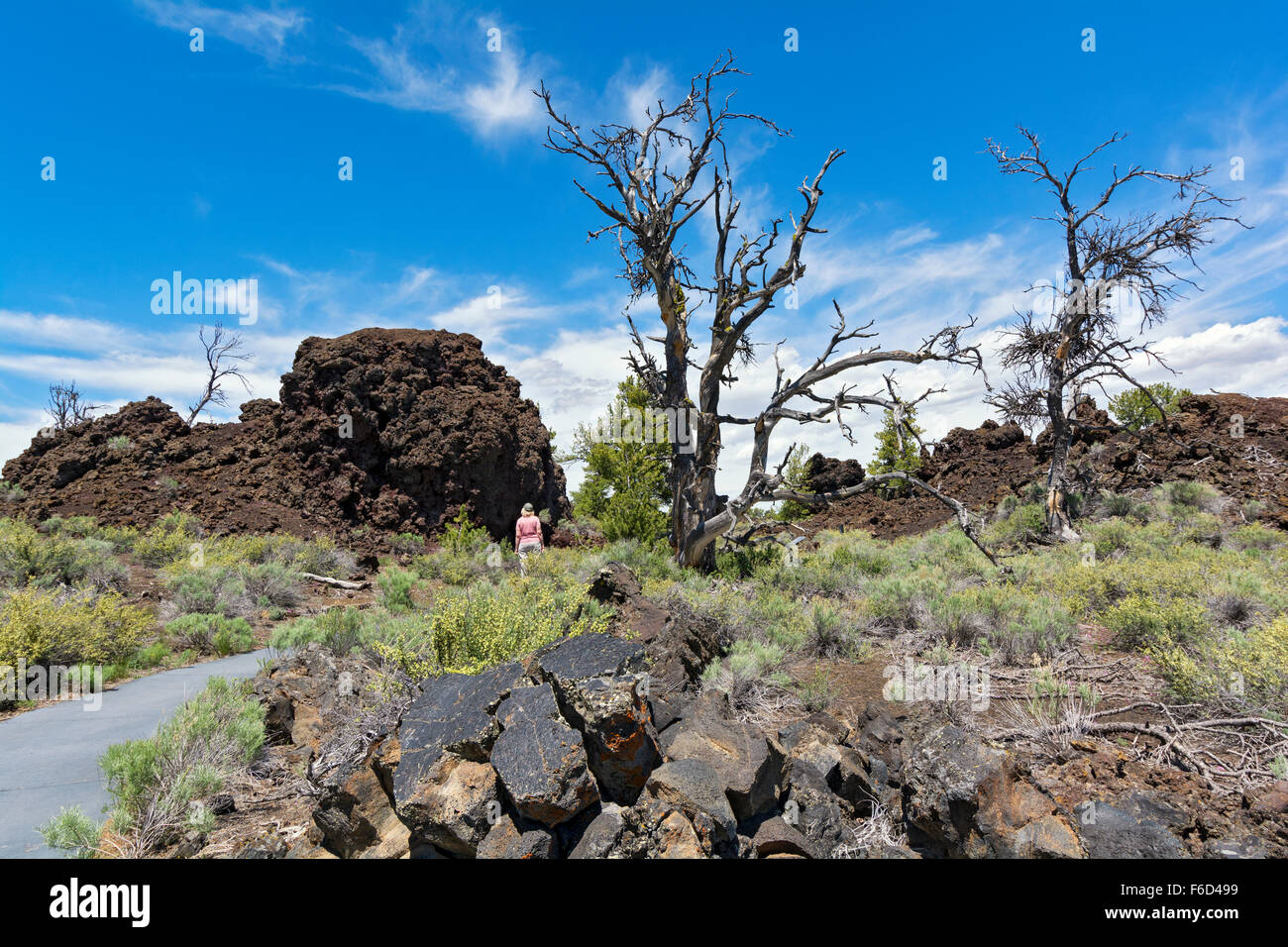 Idaho, Craters of the Moon National Monument and Preserve, Devil's Orchard Trail through lava field - Stock Image