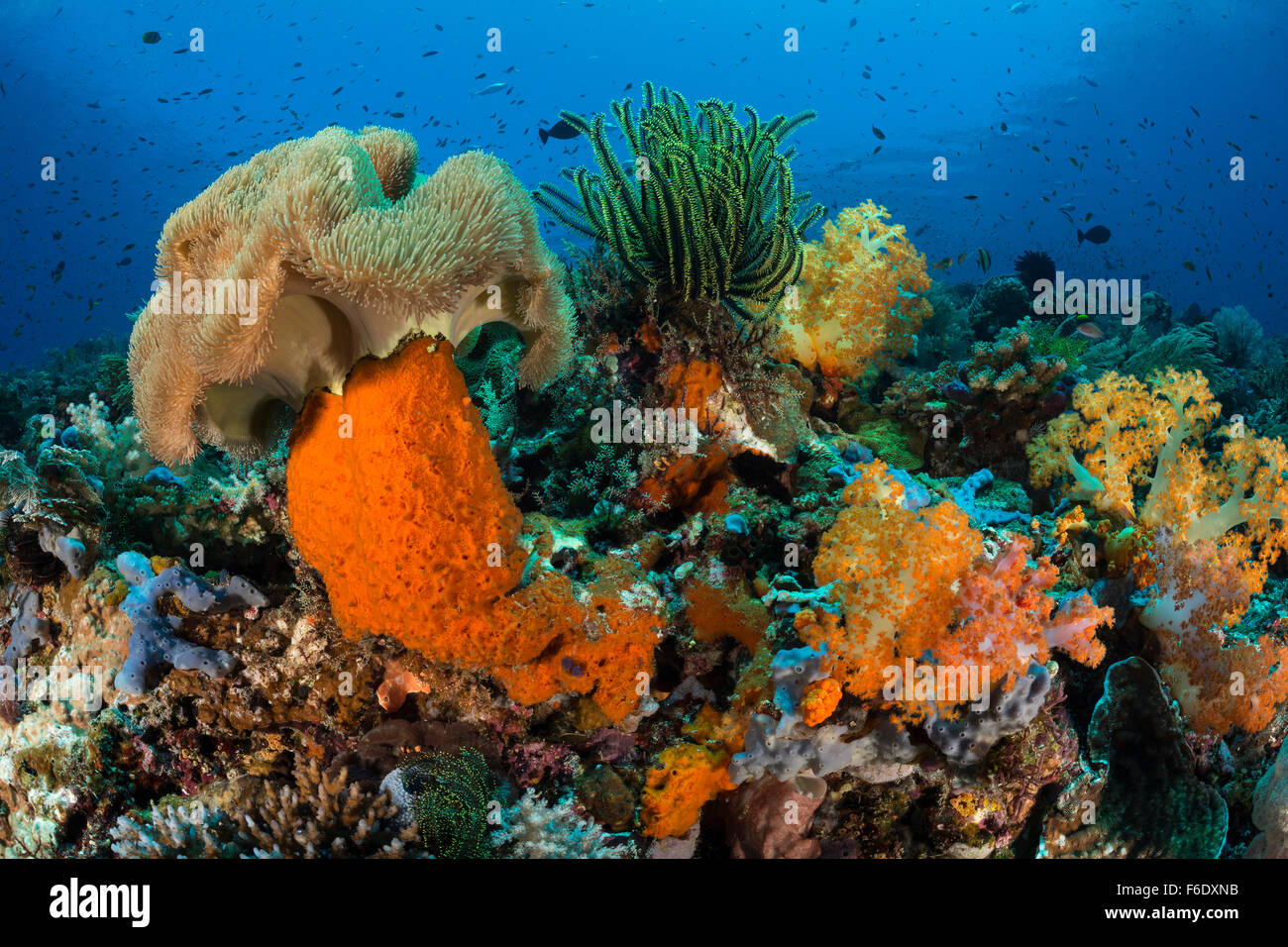 Colored Coral Reef, Komodo, Indonesia - Stock Image