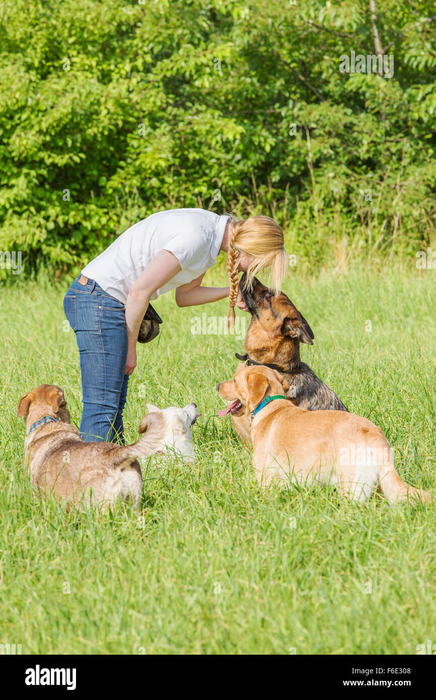 German shepherd with ears back listens to the forceful commands of the female dog trainer. - Stock Image