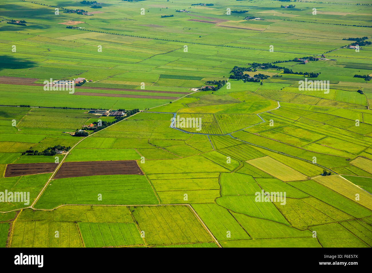 Fields, polder, drainage ditches in marsh areas, green landscape, Bunde, Leer district, Emsland, Lower Saxony, Germany - Stock Image