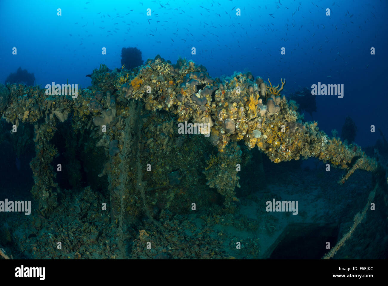 Wreck SS Albanien in 75 m depth, Pag, Croatia - Stock Image